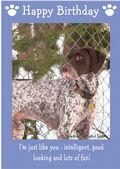 "German Short Haired Pointer-Happy Birthday - ""I'm Just Like You"" Theme"